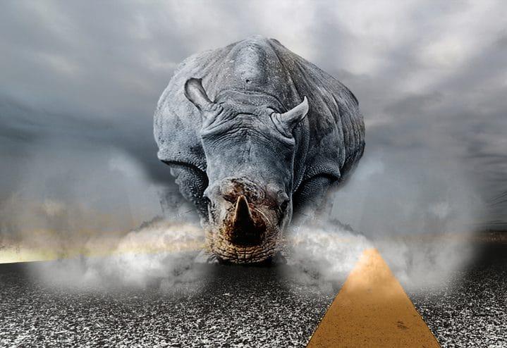 rinocerul furios
